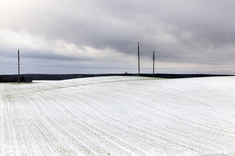 电杆,冬天 图库摄影