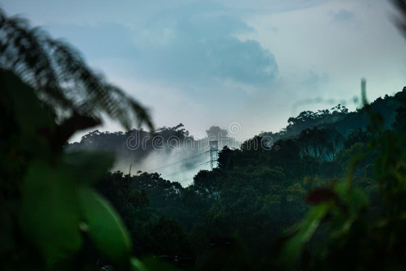 电源杆在密林,马来西亚 库存照片