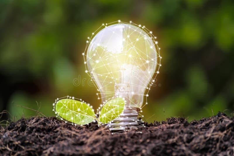 电灯泡位于土壤,并且叶子增长 免版税库存照片