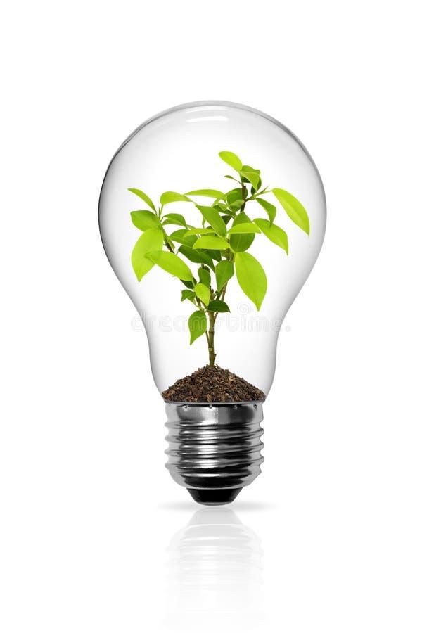 电灯泡增长的轻的幼木 库存例证