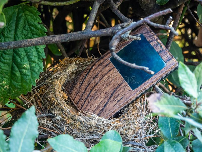电话在蒂沃利,意大利发现了鸟的巢的一个新的家在灌木在庭院里在别墅德斯特 免版税图库摄影
