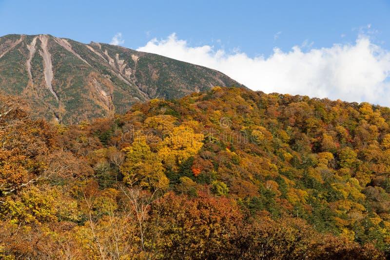 男体山和美丽的森林 库存照片