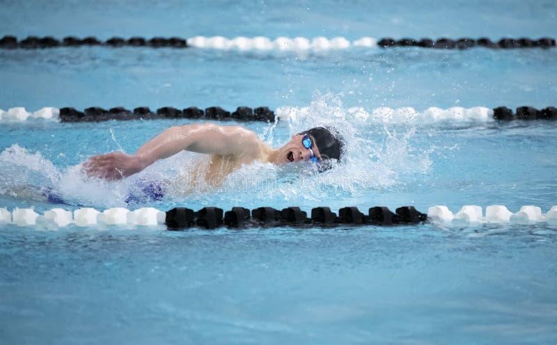 男子游泳运动员在比赛中的自由泳 库存照片