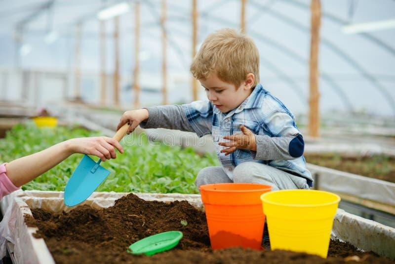 男孩一点 小男孩工作自温室 小男孩与土壤的花匠戏剧 小男孩需要母亲帮助  花 免版税库存图片