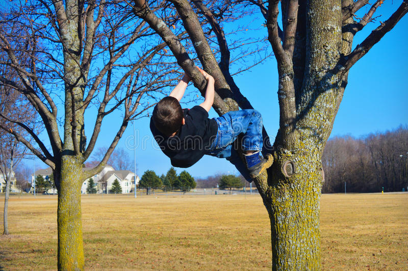 男孩上升的结构树年轻人 免版税库存照片