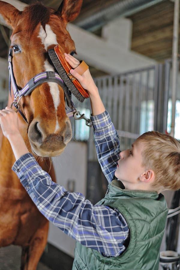 年轻男孩修饰马 免版税库存照片