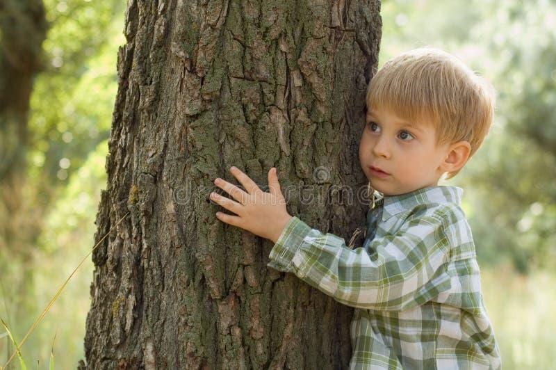 男孩关心容忍少许本质结构树 库存照片