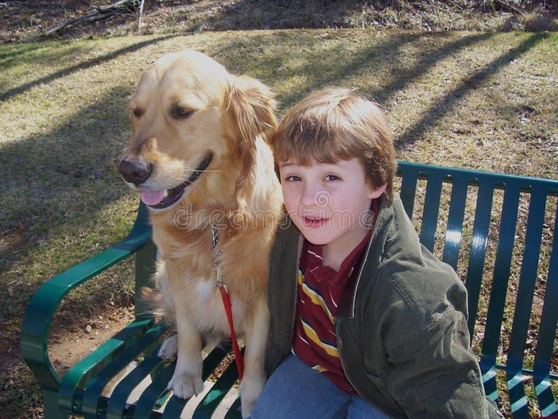 男孩和在长凳的金毛猎犬 免版税库存图片