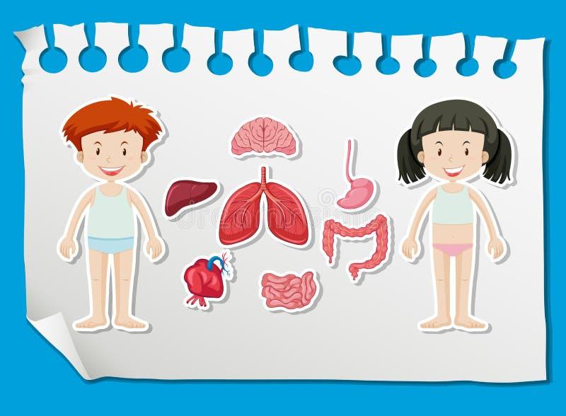 男孩和女孩用不同的器官在图 向量例证