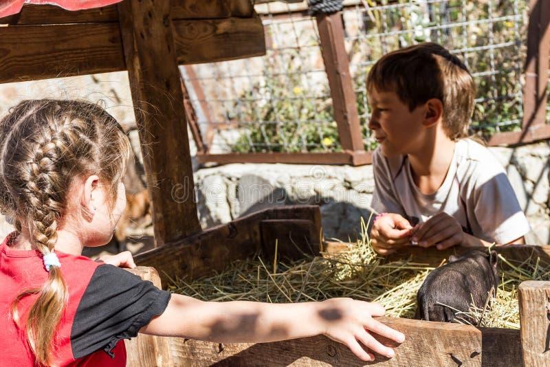 -男孩和女孩-照顾家畜的两个孩子  免版税库存照片