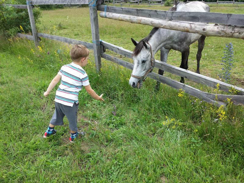 男孩和马 免版税库存图片