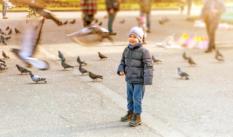 男孩和鸽子 库存照片