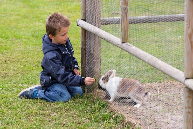 男孩哺养的兔子 免版税图库摄影