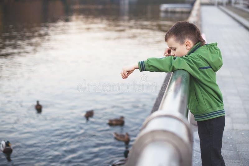 男孩喂养鸭子 免版税库存照片