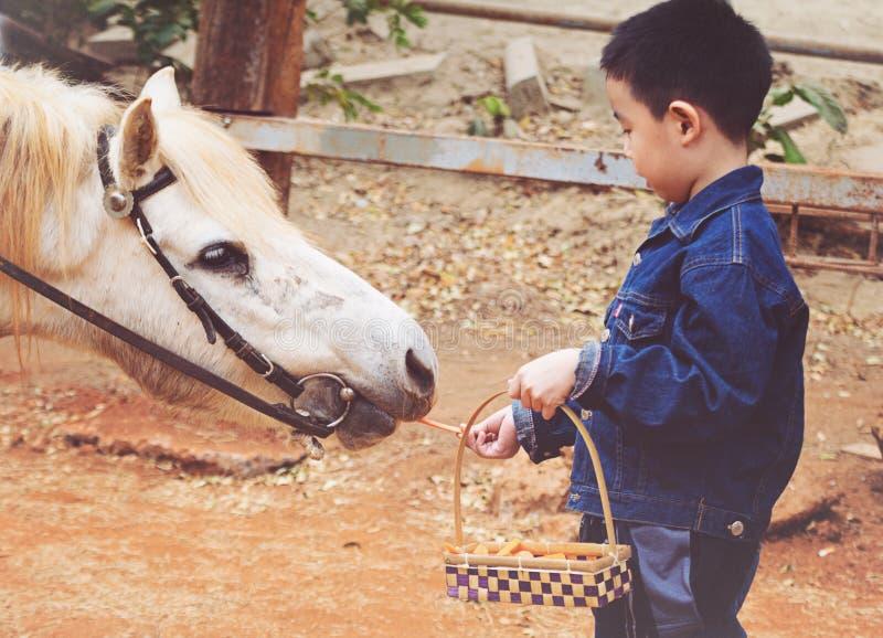 男孩在农场喂马 免版税库存照片