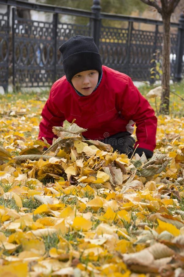 男孩在叶子坐 库存照片