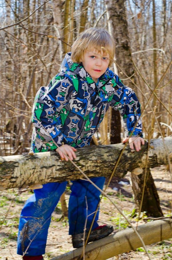 男孩在树上升 免版税库存图片