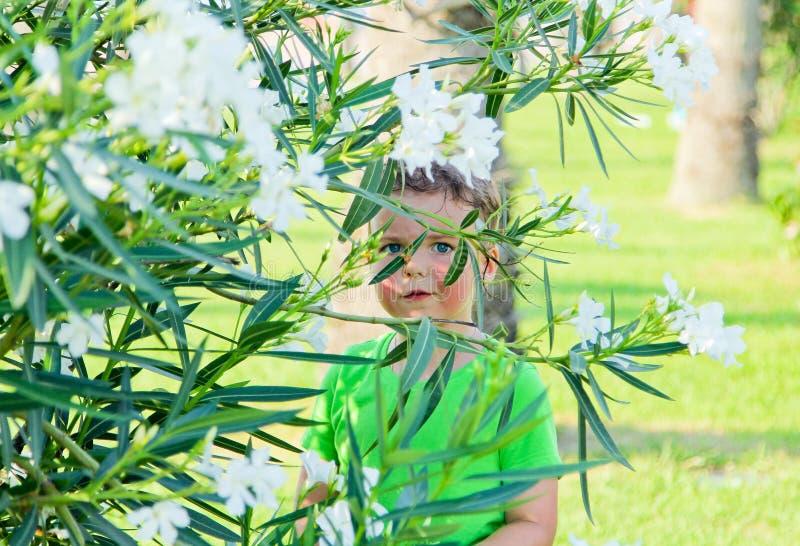 男孩在灌木白花掩藏 免版税库存照片