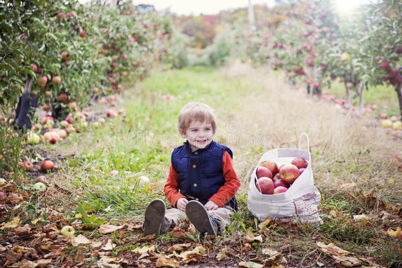 男孩在苹果树 免版税库存照片