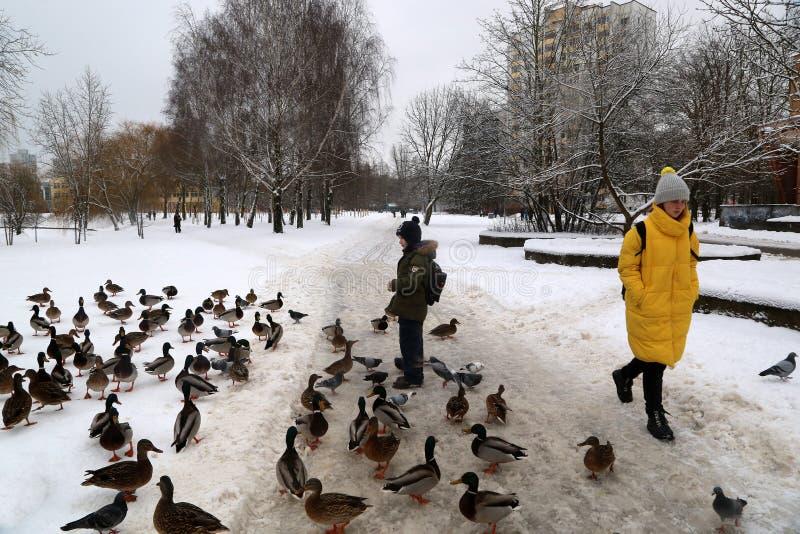 男孩在microdistrict沃斯托克的一条冻运河附近喂养在雪的野鸭 库存照片