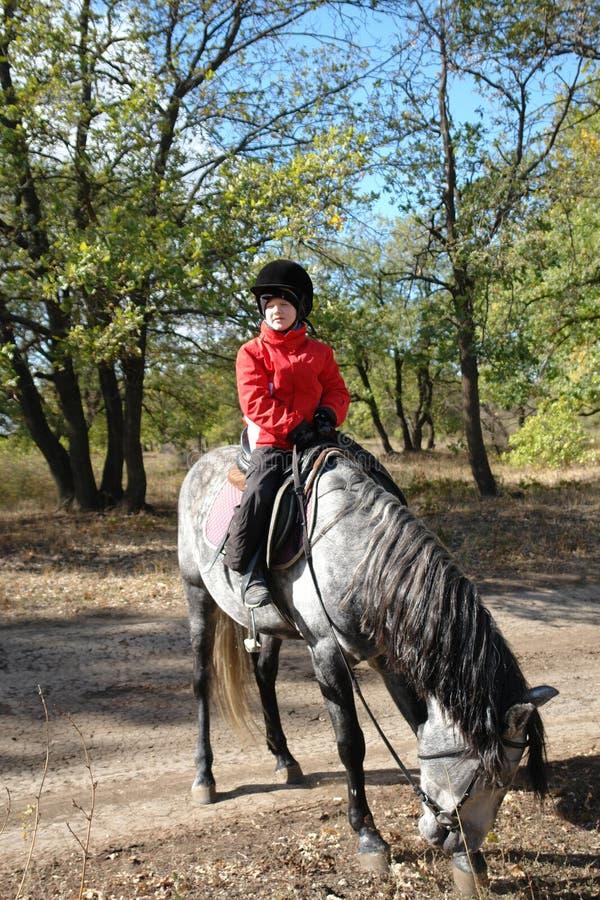 男孩坐马 免版税库存照片