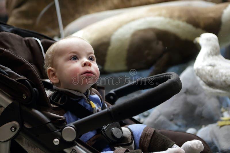 男孩坐婴儿推车 免版税库存照片