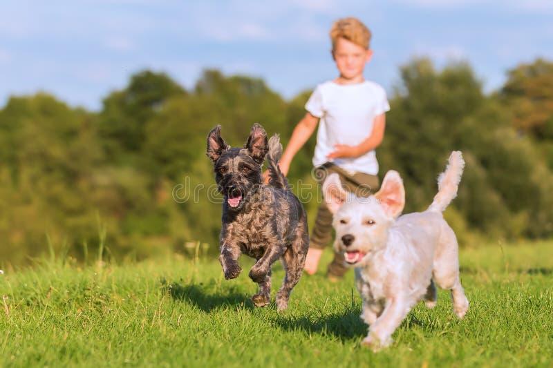男孩孩子跑与在草甸的两条狗杂种狗 图库摄影