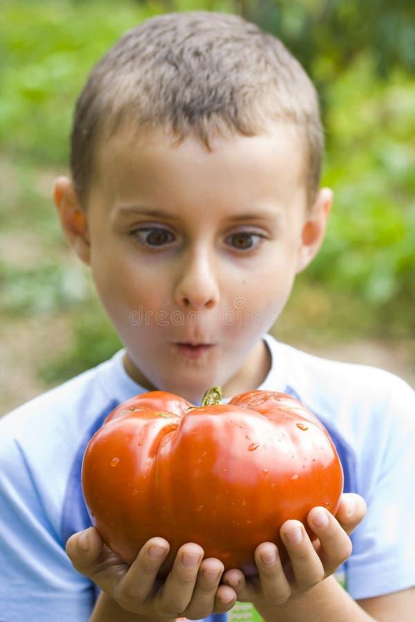 男孩巨人蕃茄 图库摄影