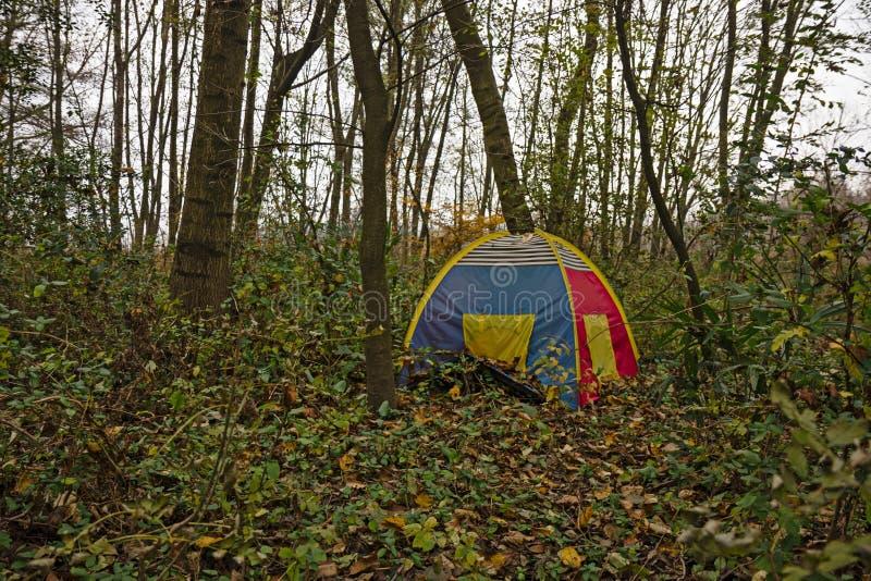 男孩帐篷在森林 库存照片