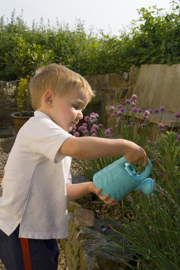 男孩庭院浇灌的年轻人 库存照片