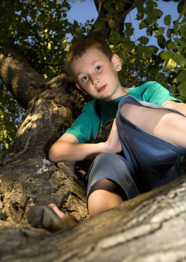 男孩庭院结构树 库存图片