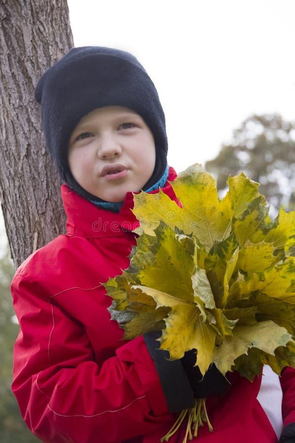 男孩拿着槭树叶子花束  免版税图库摄影