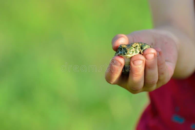男孩拿着水青蛙、人和自然 免版税库存照片