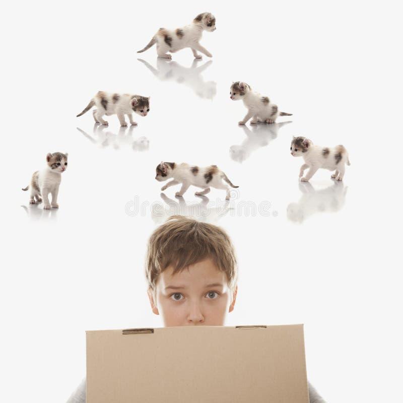 男孩梦想被提出与小猫 库存照片