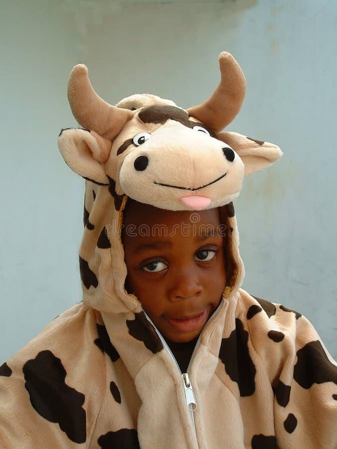 男孩母牛 免版税库存照片