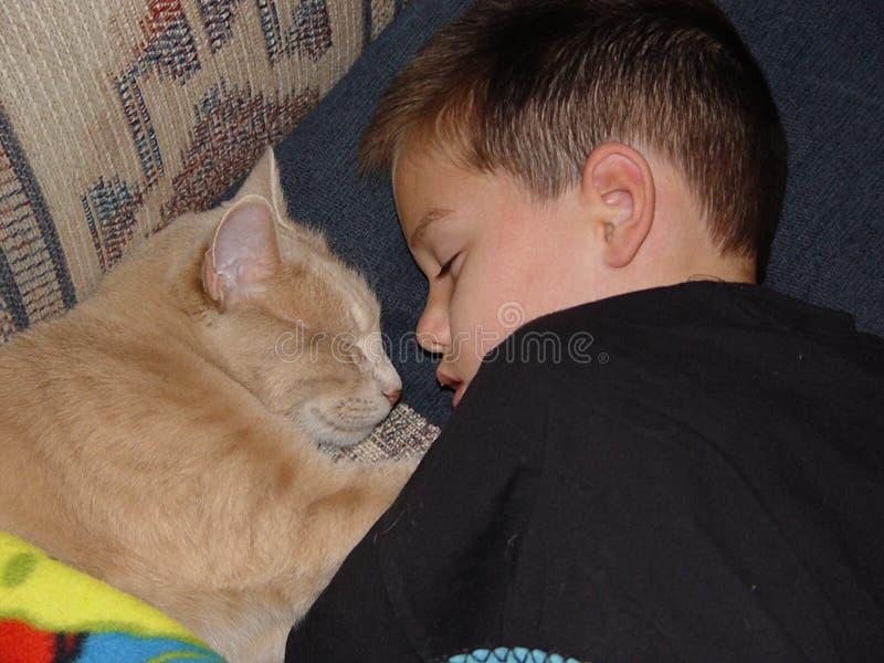 男孩猫休眠 库存照片