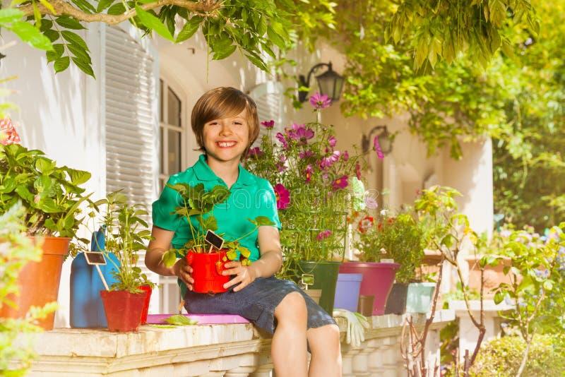 男孩用在阳台庭院的盆的草莓 库存照片