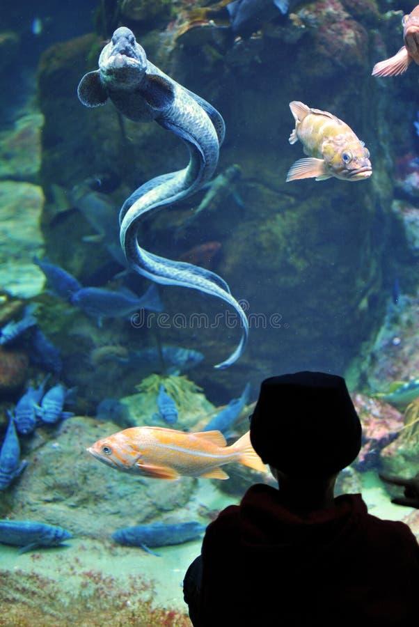 男孩考虑鳗鱼 免版税图库摄影
