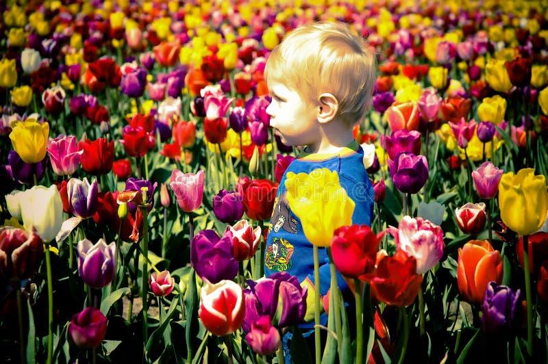 Download 男孩郁金香 库存照片. 图片 包括有 增长, 新鲜, 生活方式, 表面, 生活, 绿色, 室外, beauvoir - 22354886