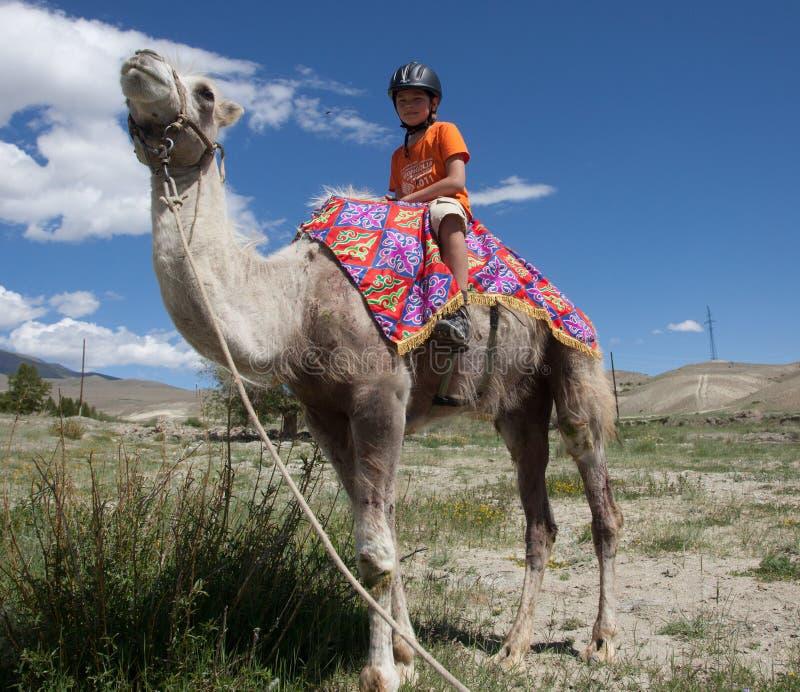 男孩骑马横跨Bactrian 免版税库存照片