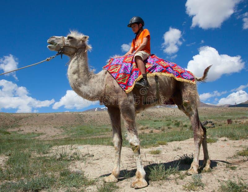 男孩骑马横跨Bactrian 免版税库存图片