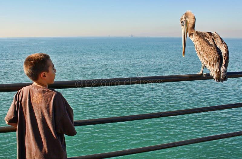 男孩鹈鹕 免版税库存图片
