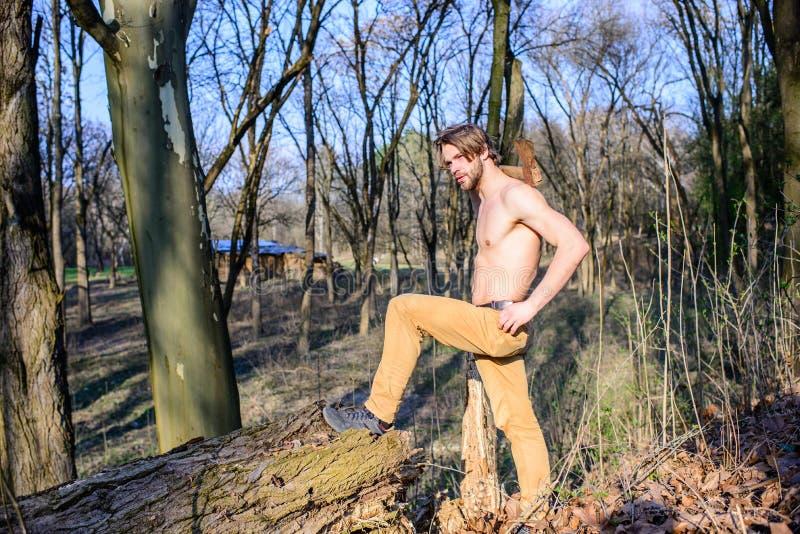 男性休闲 伐木工人或会集木头的樵夫性感的赤裸肌肉躯干 人残酷坚强的可爱的人 免版税库存照片