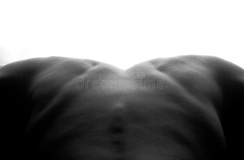 男性后面肩膀脊椎 库存照片
