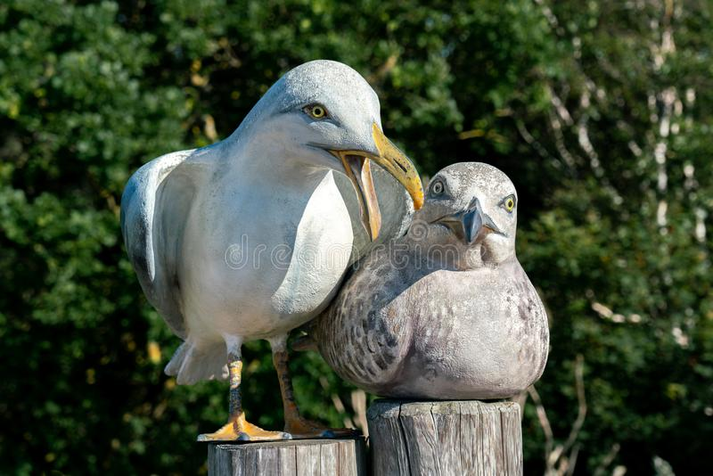 男性和一只母海鸥的雕塑 库存图片