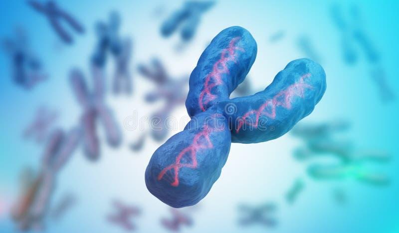 男性性别Y染色体 遗传学概念 3d被回报的例证 库存例证
