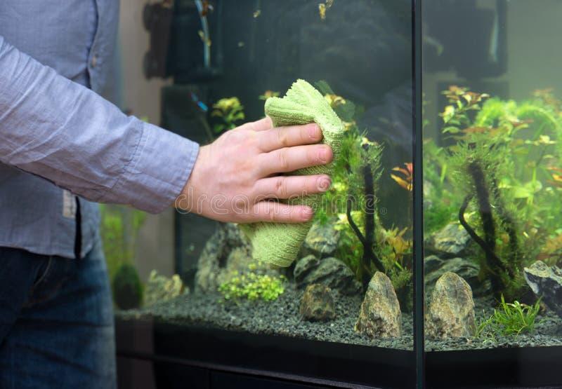 男性手清洁水族馆玻璃 免版税库存图片