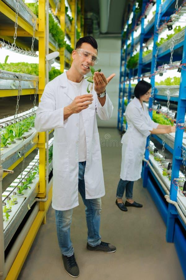 男性种植绿色的农业学家佩带的牛仔裤和白色外套 免版税库存图片