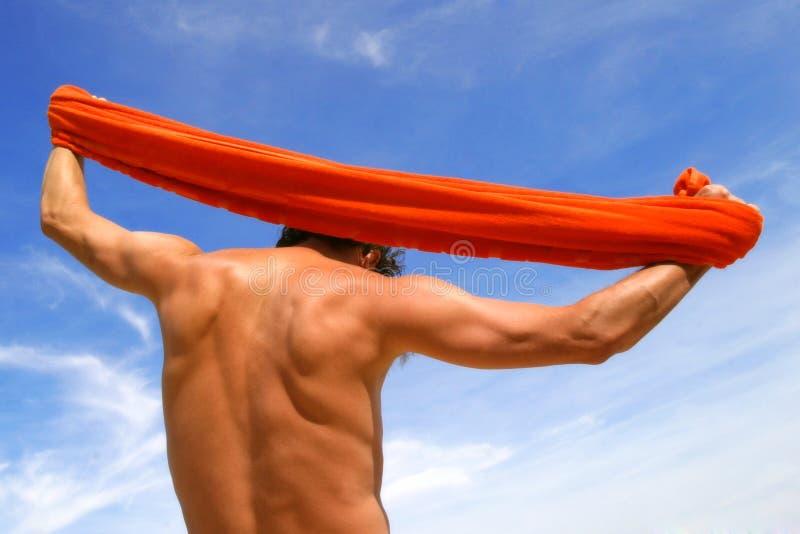 男性肌肉躯干 免版税库存图片