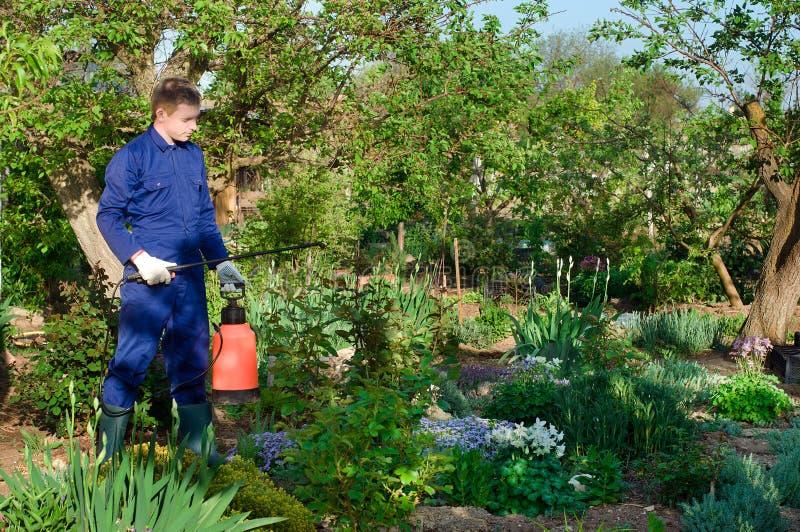 男性花匠保护的植物 库存照片